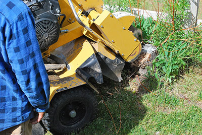 Clear Cut Tree Stump Grinding